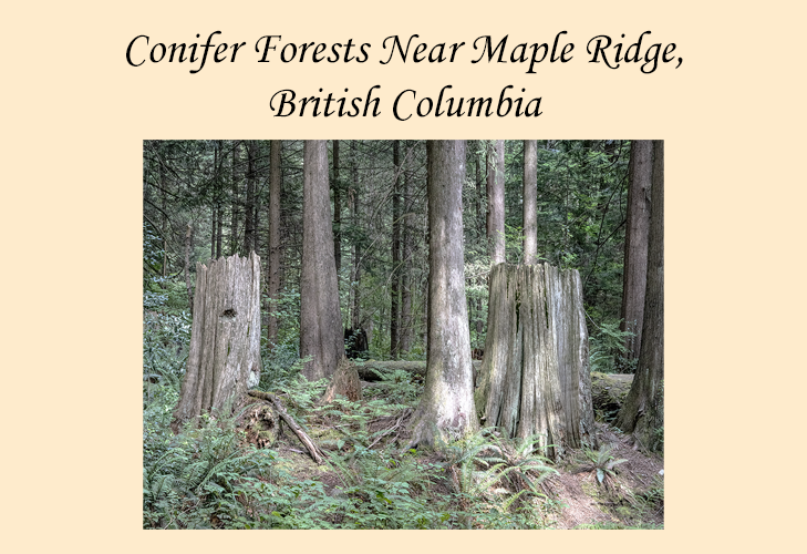 Photo Essay on BC Forests near Maple Ridge
