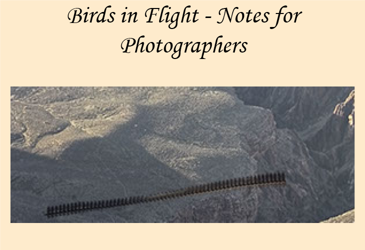 How to photograph birds in flight.