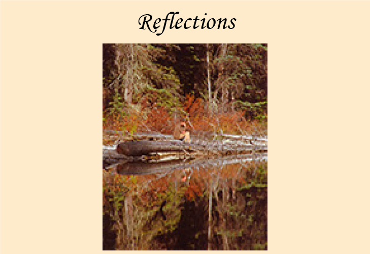 Reflections of people, places and animals.