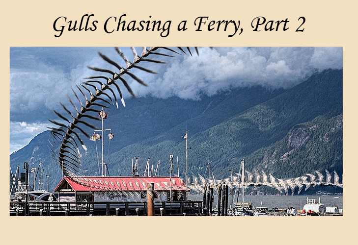 Gulls chasing a ferry, part 2